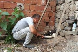 Kalkandere'de belediye tarafından Sokak hayvanlarına özel bakim