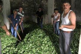 Kendi çayını yükleyen çiftçiye peşin para