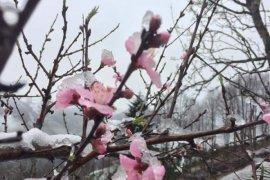 16 Mart 2020 Kalkandere'den kar manzaraları