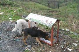 Kaymakamligimizdan Sokak hayvanları ile ilgili sosyal proje
