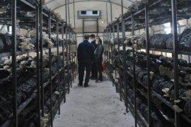 Kalkandere'de İstiridye Mantarı Tesisi Açıldı