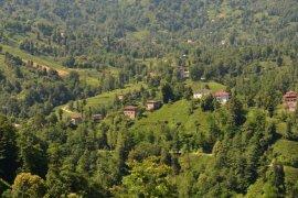 Adım adım Kalkandere Dağdibi mahallesi