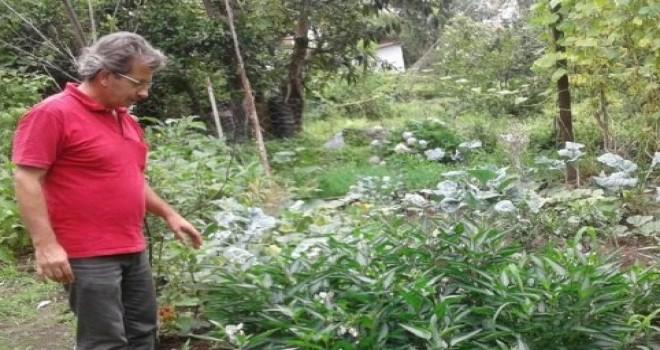 Rize'de 12 Ay Boyunca Organik Sebze üretimi Gerçekleştirdi