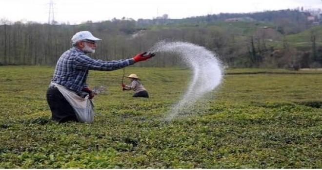 Çay Bahçelerinde Gübreleme Zamanı!