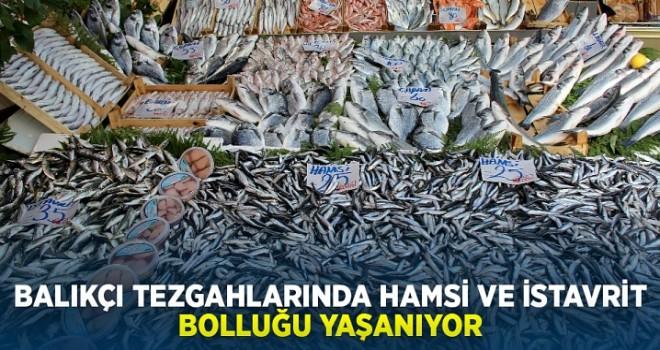 Balıkçı tezgahlarında hamsi ve istavrit bolluğu yaşanıyor fiyatlar gine aynı