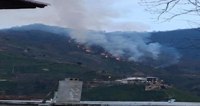 Kalkandere de orman yangını çıktı