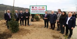 Rize OSB Adalet Ormanının İlk Fidanları Dikildi